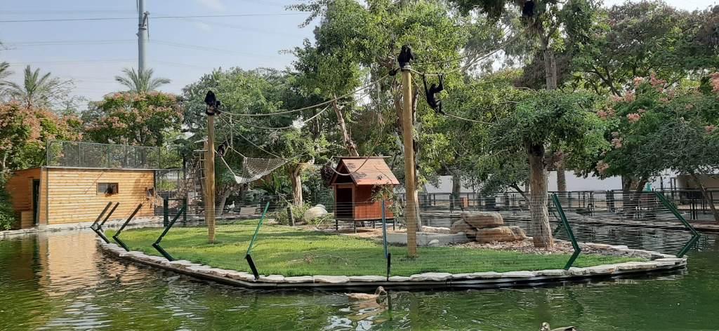 אי הקופים בחי כיף ראשון לציון